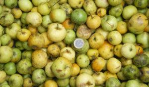 Manzanas silvestres del Ganekogorta